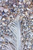 Bird down macro on beach stones background fine art in high quality prints products Canon 5DS - 50,6 Megapixels royalty free stock photo