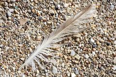 Bird down macro on beach stones background fine art in high quality prints products Canon 5DS - 50,6 Megapixels stock image