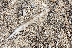 Bird down macro on beach stones background fine art in high quality prints products Canon 5DS - 50,6 Megapixels stock photography
