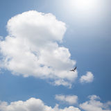Bird and dramatic clouds Royalty Free Stock Photography