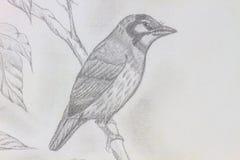 Bird drawing Stock Photos