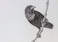 Bird drawing Royalty Free Stock Photos