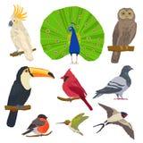 Bird Drawn Icon Set Royalty Free Stock Photo