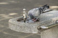 Bird drinking Stock Photo