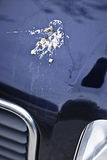Bird droppings on car hood stock image