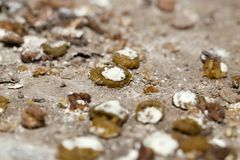 Bird droppings. macro. Photo of an abstract texture Stock Image
