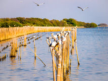 Bird on dry bamboo in the sea Royalty Free Stock Photos