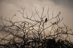 Bird on a dry tree with clouds in the background Royalty Free Stock Image