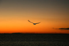 Bird an dSunset - Fraser Island, UNESCO, Australia Stock Photos