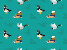 Bird Ducks Wallpaper Stock Photography