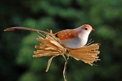 Bird dummy 1. Bird imitation for decoration bird royalty free stock image