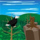 Bird Eagle Sits On Tree Stock Photo