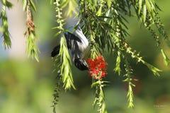 Bird. Royalty Free Stock Photo