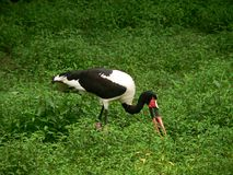 Bird eating Stock Photo