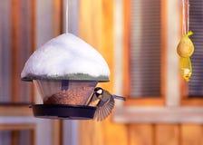 Bird eating at birdfeeder in winter Rovaniemi. Lapland, Finland Royalty Free Stock Photo