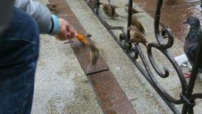 Bird eating fast food stock video