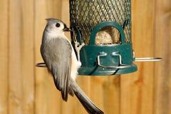 Bird eating. Bird feeding on bird feed Stock Photo