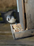 Bird eating seed  wooden bird feeder. Small bird eating seed at wooden bird feeder Stock Photos