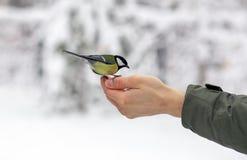Bird eats food on the palm Stock Photos