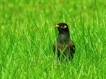 Bird, Ecosystem, Beak, Grass Royalty Free Stock Image