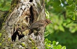 Bird, Ecosystem, Fauna, Beak Stock Photo