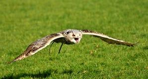 Bird, Ecosystem, Fauna, Beak Stock Images