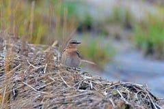 Bird, Ecosystem, Fauna, Beak Royalty Free Stock Image