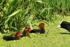 Bird, Ecosystem, Fauna, Galliformes