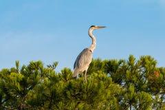 Bird, Ecosystem, Fauna, Nature Reserve Royalty Free Stock Photo