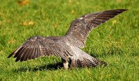 Bird, Ecosystem, Fauna, Nature Reserve Stock Photos