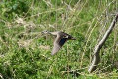 Bird, Ecosystem, Fauna, Nature Reserve Stock Image