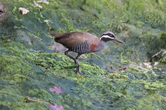 Bird, Ecosystem, Fauna, Nature Reserve Royalty Free Stock Images