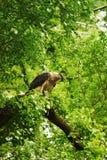 Bird, Ecosystem, Fauna, Nature Reserve