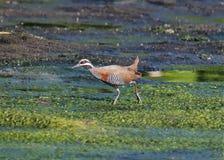 Bird, Ecosystem, Fauna, Wildlife Stock Image
