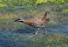 Bird, Ecosystem, Fauna, Wildlife Stock Photos