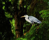 Bird, Ecosystem, Nature Reserve, Beak Royalty Free Stock Image