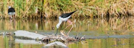 Bird, Ecosystem, Nature Reserve, Fauna Stock Images