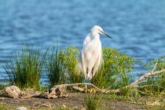 Bird, Ecosystem, Nature Reserve, Fauna Stock Image