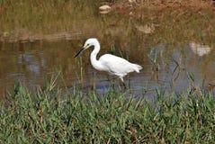 Bird, Ecosystem, Nature Reserve, Fauna Stock Photography