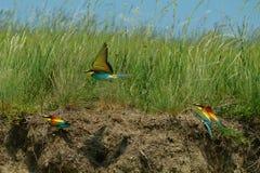 Bird, Ecosystem, Nature Reserve, Fauna Stock Photos