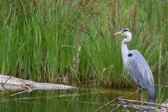 Bird, Ecosystem, Nature Reserve, Fauna Royalty Free Stock Photos
