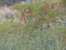 Bird, Ecosystem, Vegetation, Fauna royalty free stock images