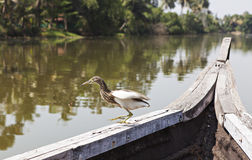 Bird on the edge of the boat Royalty Free Stock Image