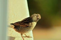 Panama City Beach Bird on the edge royalty free stock images