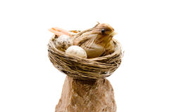 Bird with egg in the bird nest Stock Photos