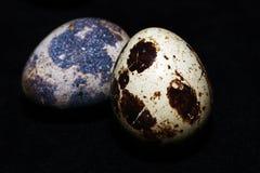 Bird Egg Macro View Royalty Free Stock Image