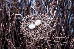 Bird egg in net Stock Images