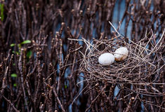 Bird egg in net Stock Photos