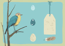 Bird and Eggs Royalty Free Stock Photo