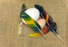 Bird eggs Stock Photography